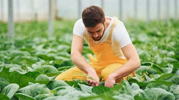 Recruitment For Greenhouse Worker In Canada
